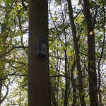 Bat box in situ