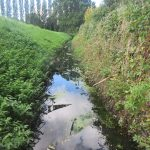 Water vole ditch profile